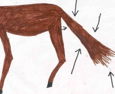 A Pony Tail