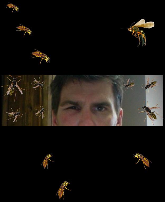 Wasp attack.001