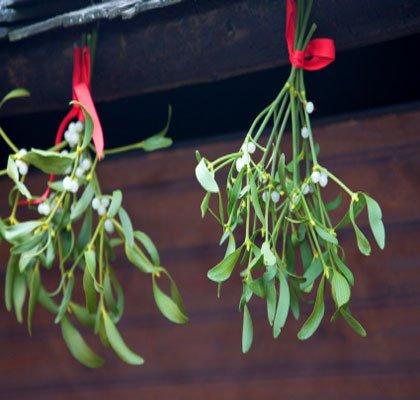 21b. mistletoe