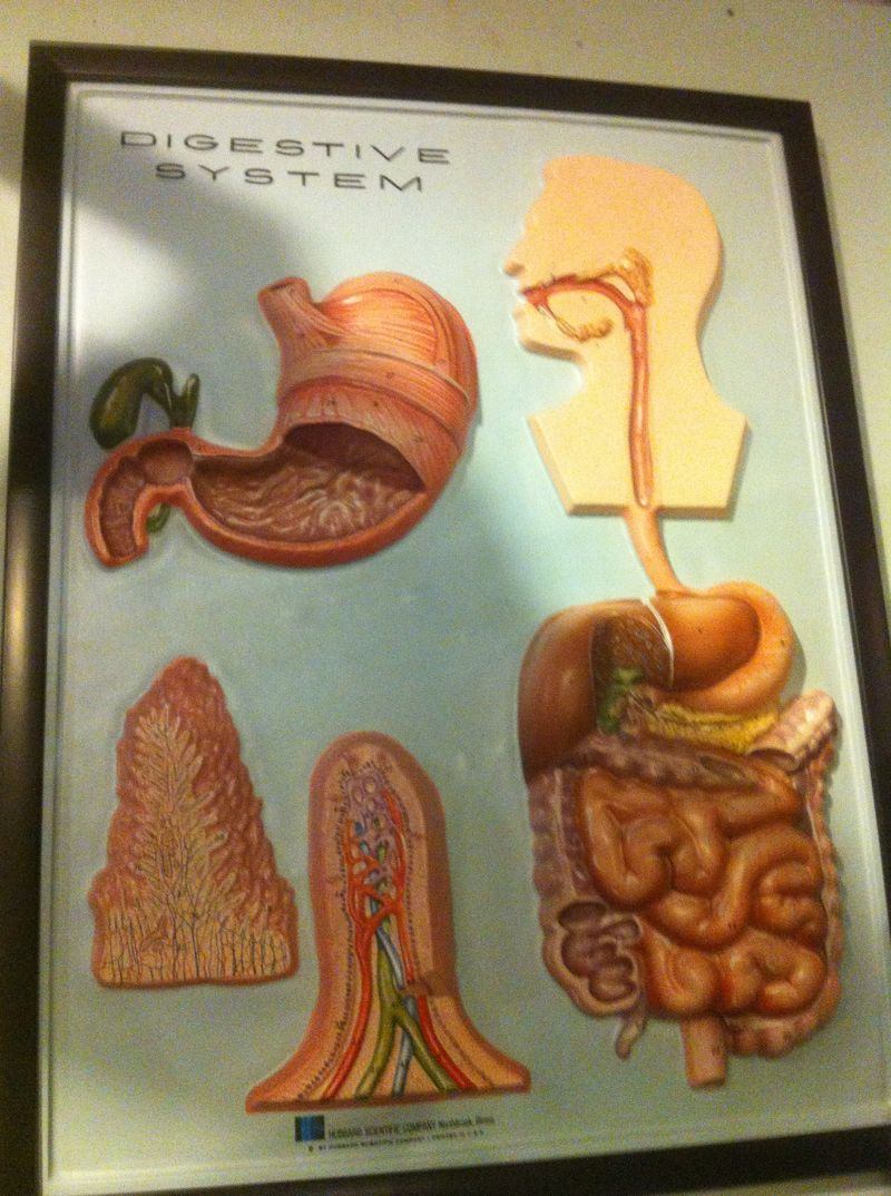 Digestive tract picture